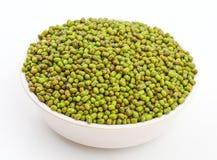 绿豆豇豆aconitifolia 免版税库存图片