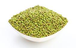 绿豆豇豆aconitifolia 免版税库存照片