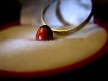 豆雕刻了诗歌红色环形 库存照片