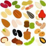 豆,螺母,种子 皇族释放例证