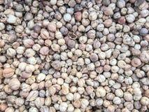 豆蔻果实种子 库存照片
