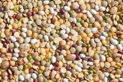 豆类混合物 免版税库存照片