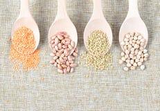 豆类的各种各样的类型 免版税图库摄影