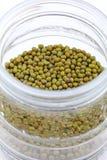 豆绿色大豆 库存图片