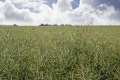 豌豆丰富多样的庄稼  免版税库存图片