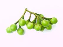 豌豆茄子,茄属torvum,查出在空白背景 库存照片