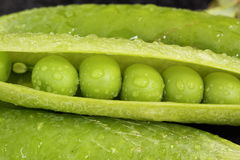 豌豆荚 图库摄影
