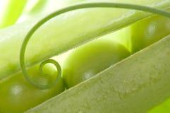 豌豆荚 免版税图库摄影