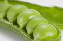 豌豆荚 免版税库存图片