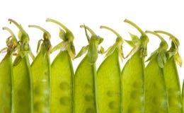 豌豆荚 免版税库存照片