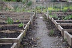 豌豆补丁被上升的床 免版税库存照片