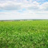 豌豆领域 库存图片