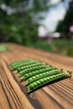 豌豆 免版税库存照片