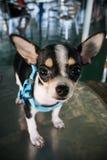 画象一条逗人喜爱的小狗 免版税库存照片