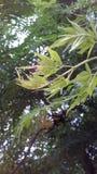 象一棵小的树 免版税库存图片