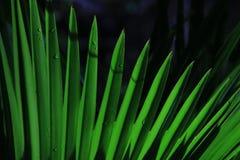 象可能是强的叶子结构的鲜绿色的剑 免版税库存图片