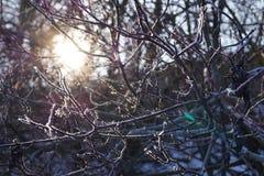 象太阳通过树的分支发光的童话的美好的冬天风景 库存图片