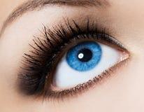 象女人的眼睛 免版税库存图片