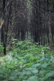 象山公园 免版税库存照片