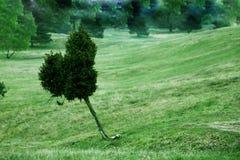 象查找结构树的重点 库存图片