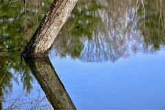 象水的镜子在公园反射树 免版税图库摄影