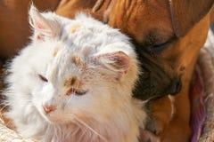 象猫和狗 免版税库存图片