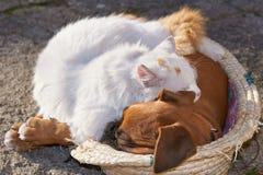 象猫和狗 免版税库存照片