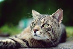 画象猫 图库摄影