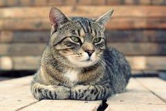 画象猫 免版税库存照片