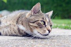 画象猫 免版税库存图片