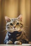 画象猫 库存照片