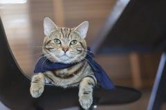 画象猫 免版税图库摄影