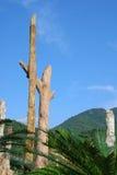 象突出那里结构树的看起来的化石 免版税库存图片