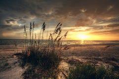 象草和海滩日落 库存照片