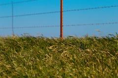 象草的垄沟在得克萨斯在一个大风天 库存照片