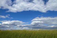 象草的天空 免版税库存图片