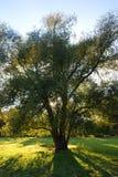 象草的小山结构树 免版税图库摄影