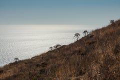 象草的山坡的侧视图 图库摄影
