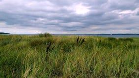 象草的沙丘在丹麦在Elsinore区域  免版税库存图片