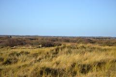 象草的沙丘 库存图片