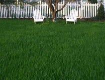 象草的草坪 库存图片