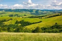 象草的草甸和树木丛生的小山 免版税库存图片