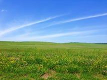 象草的草甸和蓝天 免版税库存照片