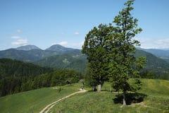 象草的草甸在Skofja Loka 库存图片