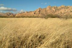 象草的草甸山 库存图片