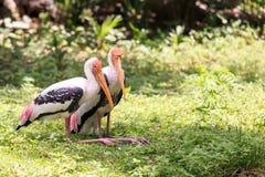 画象被绘的储蓄鸟 免版税库存照片