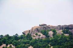 象鲤鱼和乌龟的奇怪的石头在中国(山脉)的登上黄山 库存照片