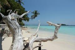 豪华旅游胜地在马尔代夫 免版税库存照片