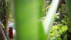 豪华热带植物在有吊床的温泉渡假胜地在大阳台在被弄脏的bokeh的密林从植物和 影视素材