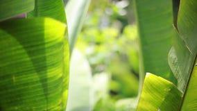 豪华热带植物在有吊床的温泉渡假胜地在大阳台在被弄脏的bokeh的密林从植物 股票视频